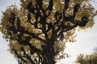 A unique tree