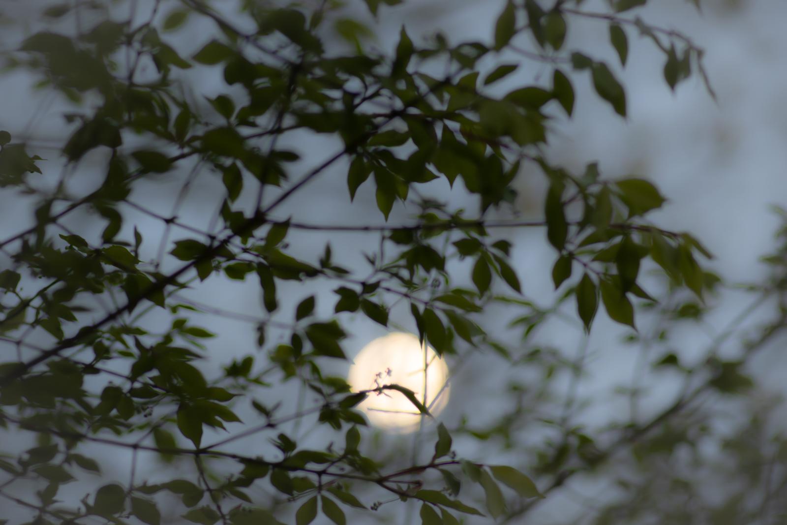 The Flower Moon